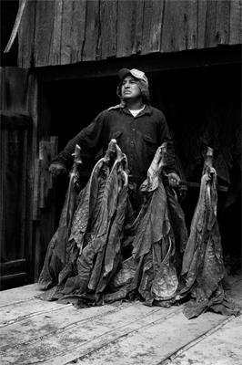 Migrant Tobacco Worker #1