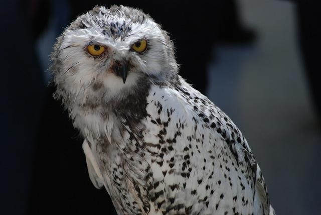 MBTI Types As Spirit Animals  IntraScholar