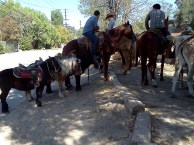 Lots of horses!
