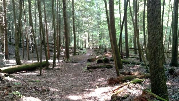 Open forest floor