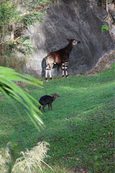 In the animal kingdom the only animal to take so long to be on its own (18 years to be exact) is the human. The calf pictured is very young and already on its own.