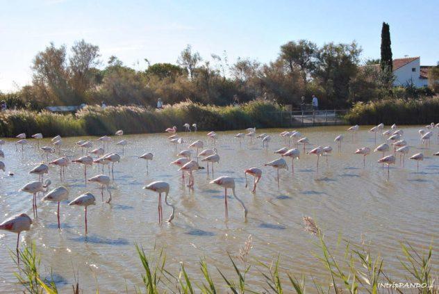 Parco ornitologico di Saintes Maries de La Mer