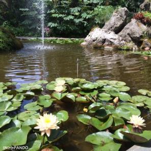 Laghetto ai giardini La Mortella di Ischia