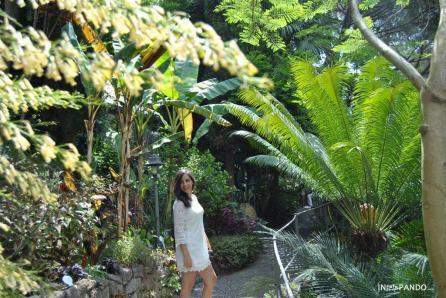 giardini-mortella-ischia-vegetazione