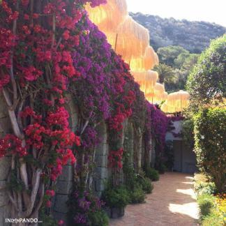 Pareti con fiori alle terme di Ischia