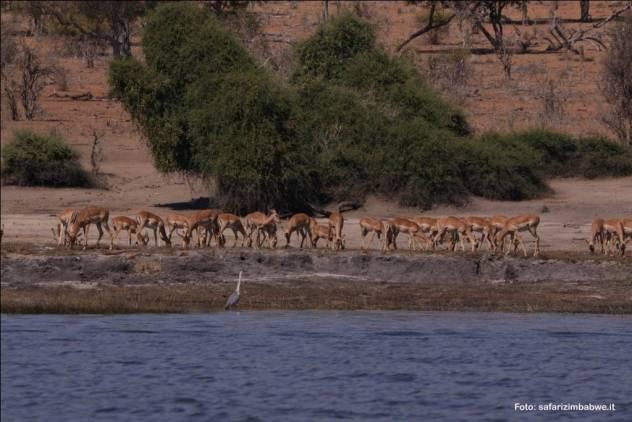 animali sulle rive del fiume Zambesi