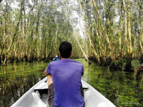 canali verdeggianti della foresta di Tra Su in Vietnam