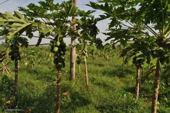 tipica vegetazione del delta del Mekong