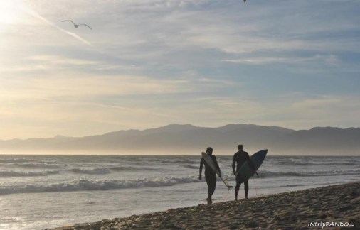 surfisti a Venice beach