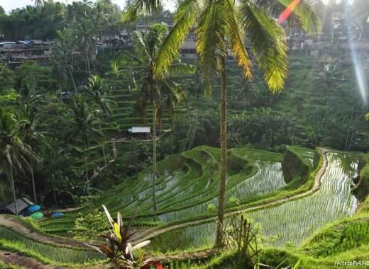 Terrazze di riso a Bali