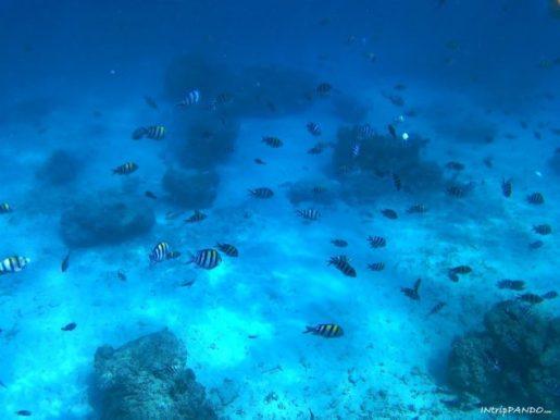 Fondale delle isole Gili