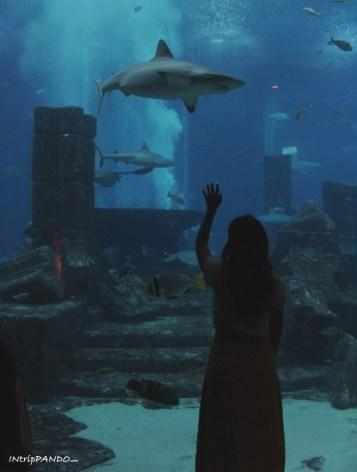 Dubai acquario Atlantis