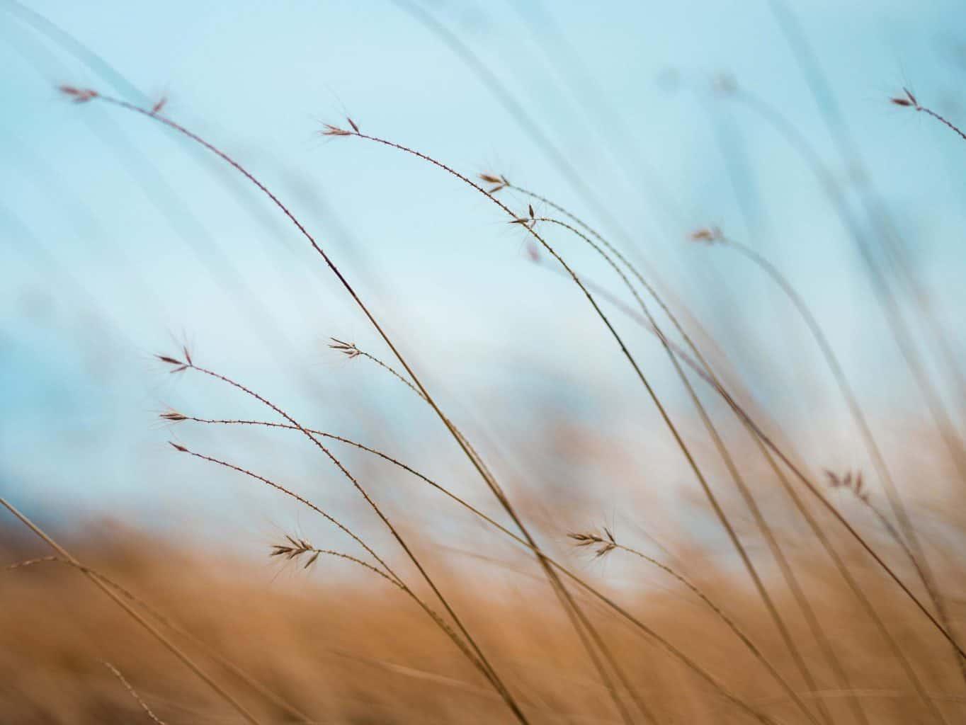 wind uitwaaien opladen introvert