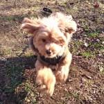 飼い犬が迷子になったり迷子犬を見つけた場合の対処方法