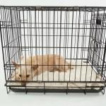 犬や猫の里親募集サイトは安全なのか?~必要なお金からよくあるトラブル