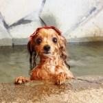 愛犬と旅行♪ペットと泊まれるホテルを簡単に見つける方法