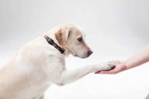 愛犬へ芸のレッスン~簡単にできるしつけからゲイの上達方法