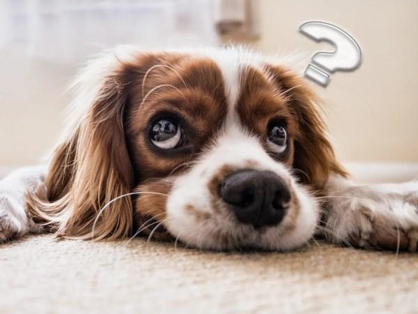 飼い犬だからわかる【犬あるある】~犬の不思議なしぐさや行動10の習性