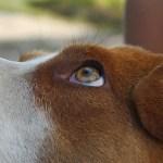 色盲といわれる犬から見た世界は実際にどう見える?~犬の視力や死角