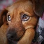 愛犬の去勢と避妊のメリットとデメリット~失敗や後遺症の可能性は?
