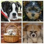 人気犬30種~犬種特有のなりやすい病気を犬種別に一挙紹介【随時更新】