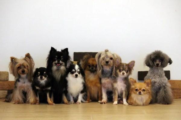 犬種特有のかかりやすい病気を全犬種一挙紹介