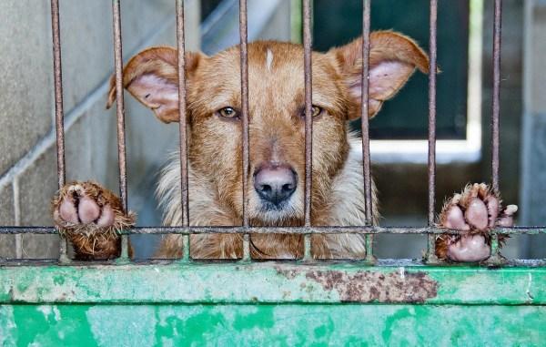 【2019】全国の動物愛護センター一覧~殺処分以外の役割や活動【随時更新】