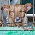 全国の動物愛護センター一覧表~保健所との違いや殺処分以外の役割