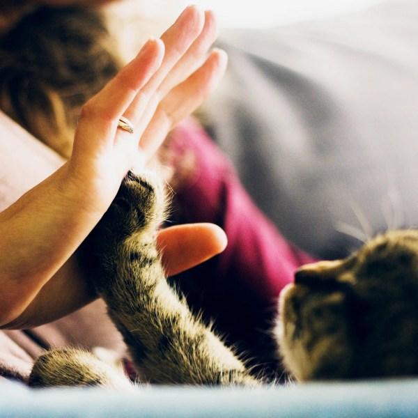 猫は犬よりも飼い主と性格や顔など見た目が似てくることが明らかになる