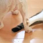 あなたは犬派?猫派?~犬好きと猫好きの幸福度はどちらが高いのか?