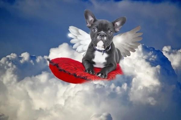 犬の諺 鶏犬雲に吠ゆる(けいけんくもにほゆる)