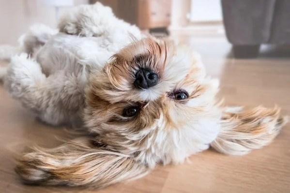 犬にクリッカートレーニング!しつけ初心者でも簡単にできる3つの方法