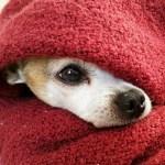 犬が震える3つの理由~病気以外に身体や足が震えたときの簡単な対処法