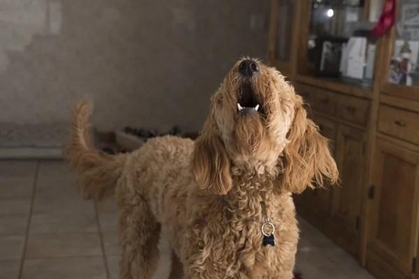 犬の諺 影もないのに犬は吠えるぬ