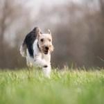 成犬でも効果絶大!愛犬を今よりも頭をよくする3つの方法