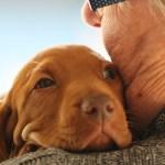 ペットと飼い主の高齢化問題~高齢者が犬を飼うということの是非