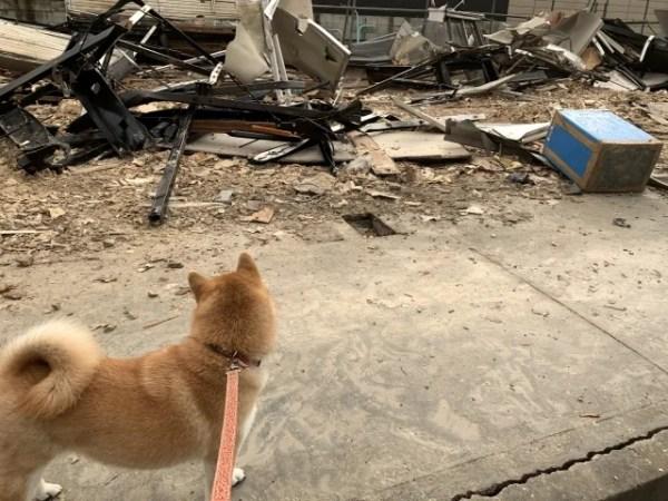 犬との同行避難と同伴避難の違い