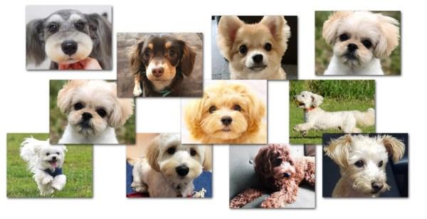 ミックス犬ランキング、インスタの検索ランク