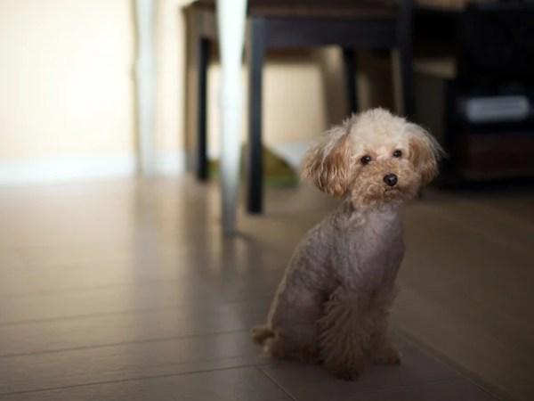 熱中症に注意が必要な室内飼いの犬