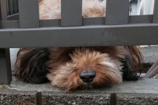 保護犬としてミックス犬を飼うという選択~ペットショップの犬と違う点多数