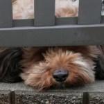 保護犬としてミックス犬を飼うという選択~ペットショップにいる犬と違う点