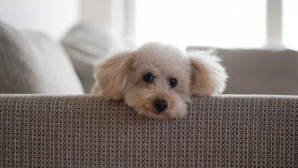 私が老犬と暮らしていて思うこと~愛犬が年を取ったことを認めてあげよう