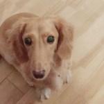 初めて犬を飼った際の失敗談~アドバイスも含め参考になる実例6選