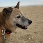 老犬のセカンドオピニオンや治療費の問題~シニア期幸せに過ごす最善策