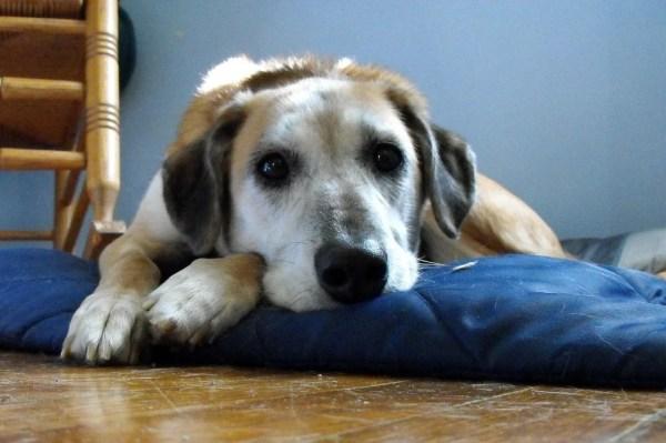 辛くて苦しいペットロス症候群から救ってくれた存在~愛犬との別れと出会い