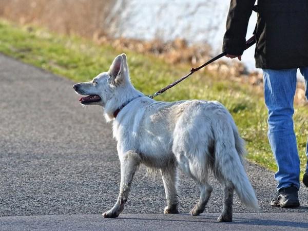 散歩中の引っ張り癖を改善した独自の方法~中型犬以上を飼っている方必見
