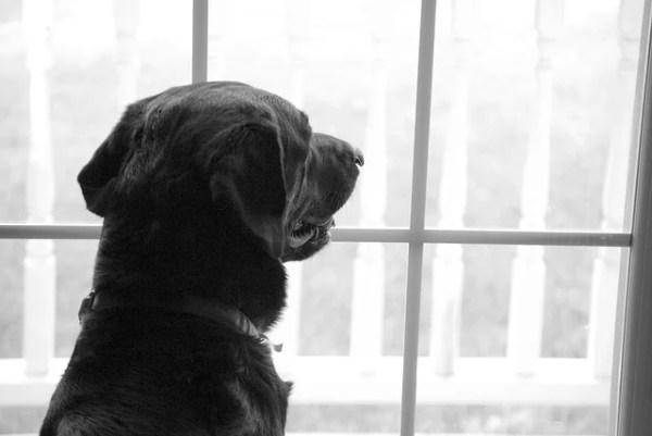 愛犬レトリーバーの台所に侵入し生ごみを漁る問題行動~試行錯誤の対策法