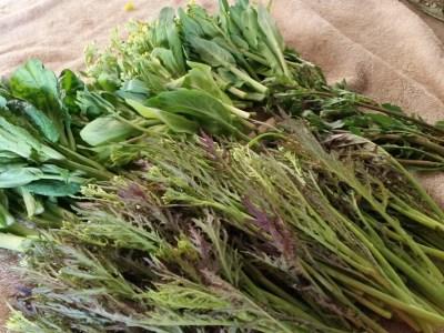 菜花と畑のハナシ
