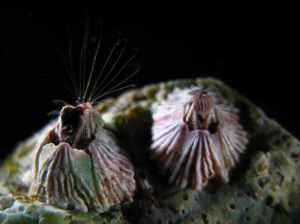 NEMESIS Database Species Summary