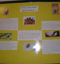 New Zealand MudSnail posters – Becky Siebold (4th grade)   Invasive Species  101 [ 2304 x 3072 Pixel ]